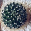 عطاری(گیاهان دارویی)
