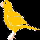 پرنده باز (پرورش پرندگان زینتی)