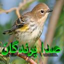 صدا های پرندگان