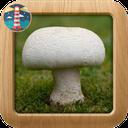 پرورش قارچ خوراکی در خانه