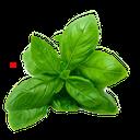نسخه های شفابخش گیاهان دارویی