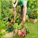 کشاورزی و کاشت سبزیجات