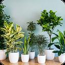 آشنایی با گیاهان اپارتمانی