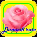 Mohammadi flower training