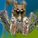فال عنکبوت