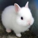 فال خرگوش