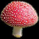 mushroom planting YHL