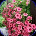 گل و گیاهان زینتی
