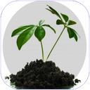 گیاهان شفابخش