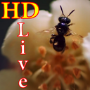 HD Bee Live Wallpaper