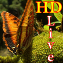HD Butterfly Live Wallpaper