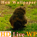 HD Hen Live Wallpaper