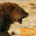 HD LION Live Wallpaper