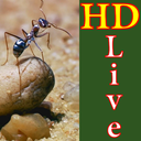 HD Silver Ant Live Wallpaper