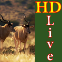 HD Wildlife Live Wallpaper