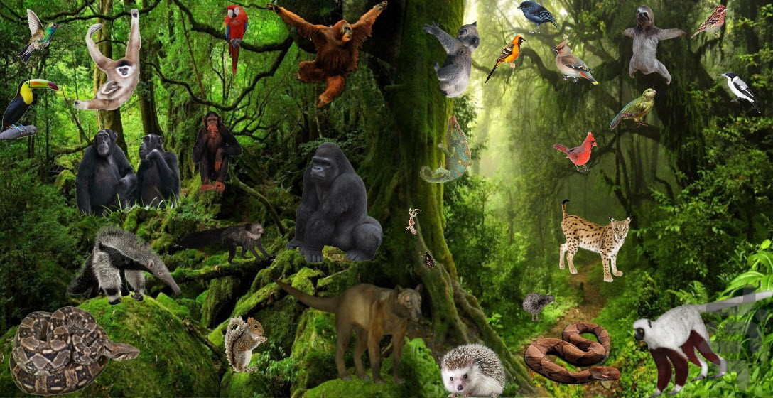 Learning Animal Sounds And Habitats Game for Android - Download | Cafe  Bazaar