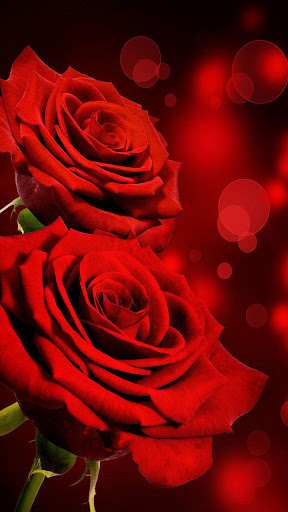 Rose Live Wallpaper For Android Download Cafe Bazaar