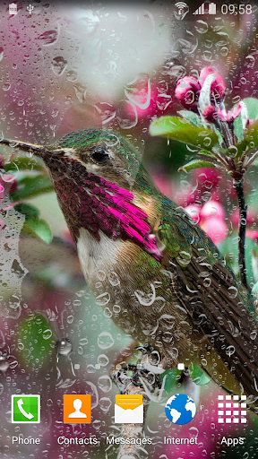 hummingbirds live wallpaper download install android apps cafe