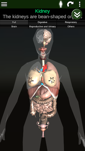 Internal Organs in 3D (Anatomy) for Android - Download