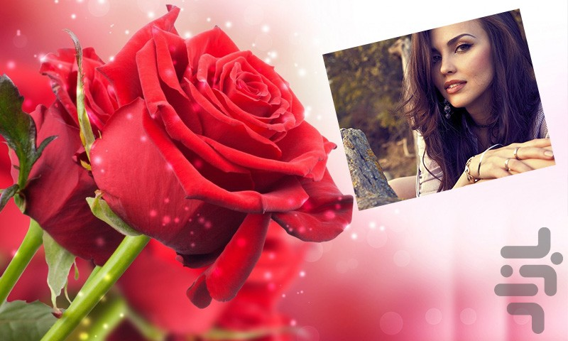 عکس گل پرپرشده