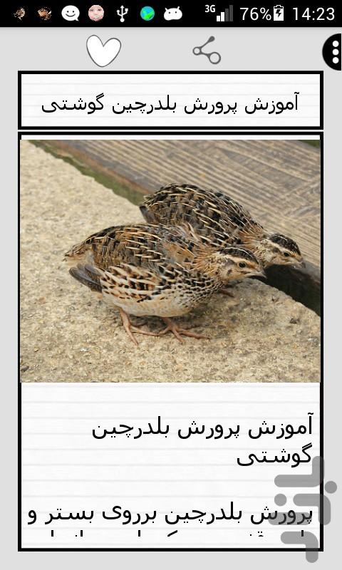 درخواست مجوز پرورش بلدرچین اصفهان Pui de prepelita