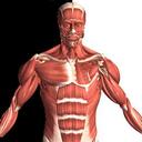 آناتومی عضلات و استخوان ها