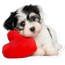 WAStickerApps Dog memes 🐶 Dog sticker 2020