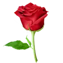 WAStickerApps 🌹Flowers And Roses