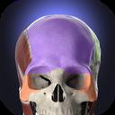 Anatomyka - 3D Human Anatomy Atlas