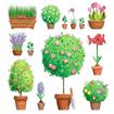 پرورش گل و گیاه آپارتمانی