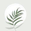 Blossom - Plant Identification app
