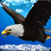 Wild Eagle Bird Simulator