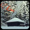 کلبه زمستانی Live