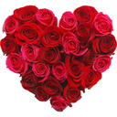 Roses Stickers – استیکر عاشقانه