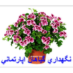 نگهداری گیاهان اپارتمانی