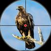 Desert Birds Sniper Shooter - Bird Hunting 2019
