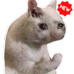 New Funny Cat Memes Stickers WAStickerApps
