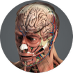 Human 3D Anatomy