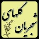 گلهای شجریان