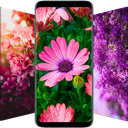 Flower Wallpapers - Colorful Flowers Backgrounds