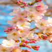 پس زمینه بهار+نوروز 95