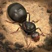 The Ants: Underground Kingdom – مورچهها: قلمروی زیرزمینی