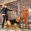 Police Dog Attack Prison Break