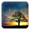 Sunset Hill Free LiveWallpaper