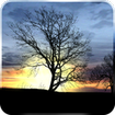 Silhouette Free Live Wallpaper