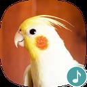 Appp.io - Cockatiel Sounds