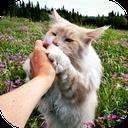 نحوه نگهداری و آموزش گربه های خانگی