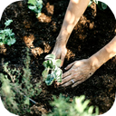 نگهداری و پرورش گل و گیاه در منزل