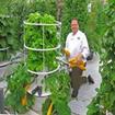 تولید وپرورش انواع سبزی