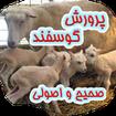 پرورش گوسفند صحیح و اصولی